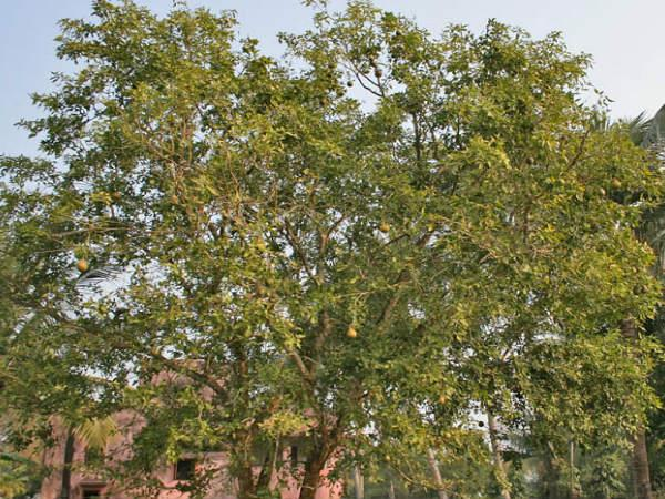 Trees India That Have Supernatural Powers