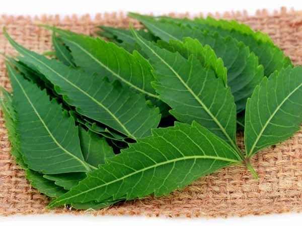 benefits of eating neem leaves in morning