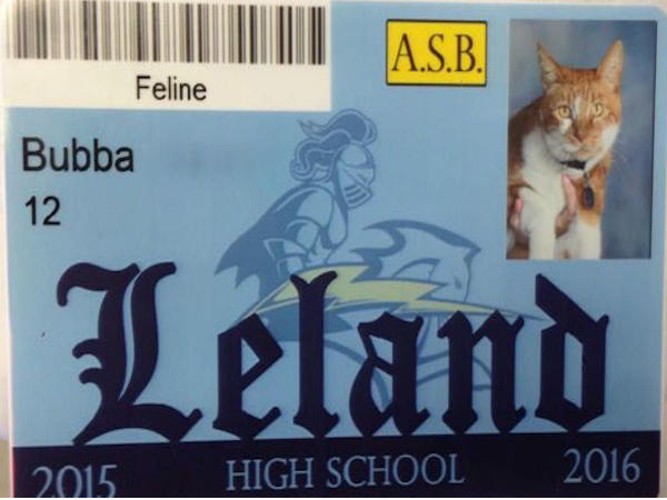 High School Adopts Local Cat Named Bubba As Student