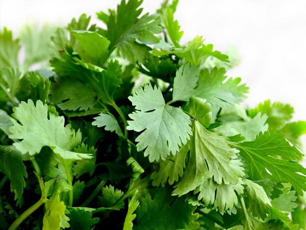 coriander for skincare