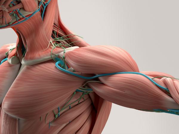 મસ્ક્યુલર ડિસ્ટ્રોફી શરીરને કેવી રીતે અસર કરે છે?