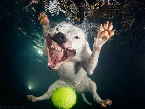 Underwater Photos Dogs Fetching Balls