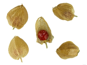 How Ashwagandha Can Be Used As Sexual Rejuvenator