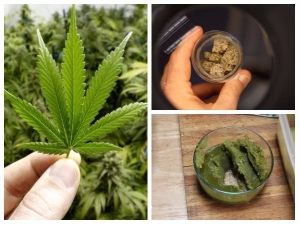 Health Benefits Marijuana You Might Not Know