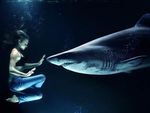 This Shark Girl Swim With Shark The Pool