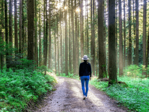 Health Boosting Benefits Of Forest Bathing Or Shinrin Yoku